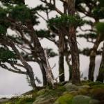 What are bonsai
