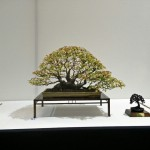 Bonsai Europa, a seriously good show!