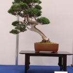 Opening of World Bonsai Convention Saitama