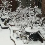 Avoid winter damage in bonsai: Sun and wind