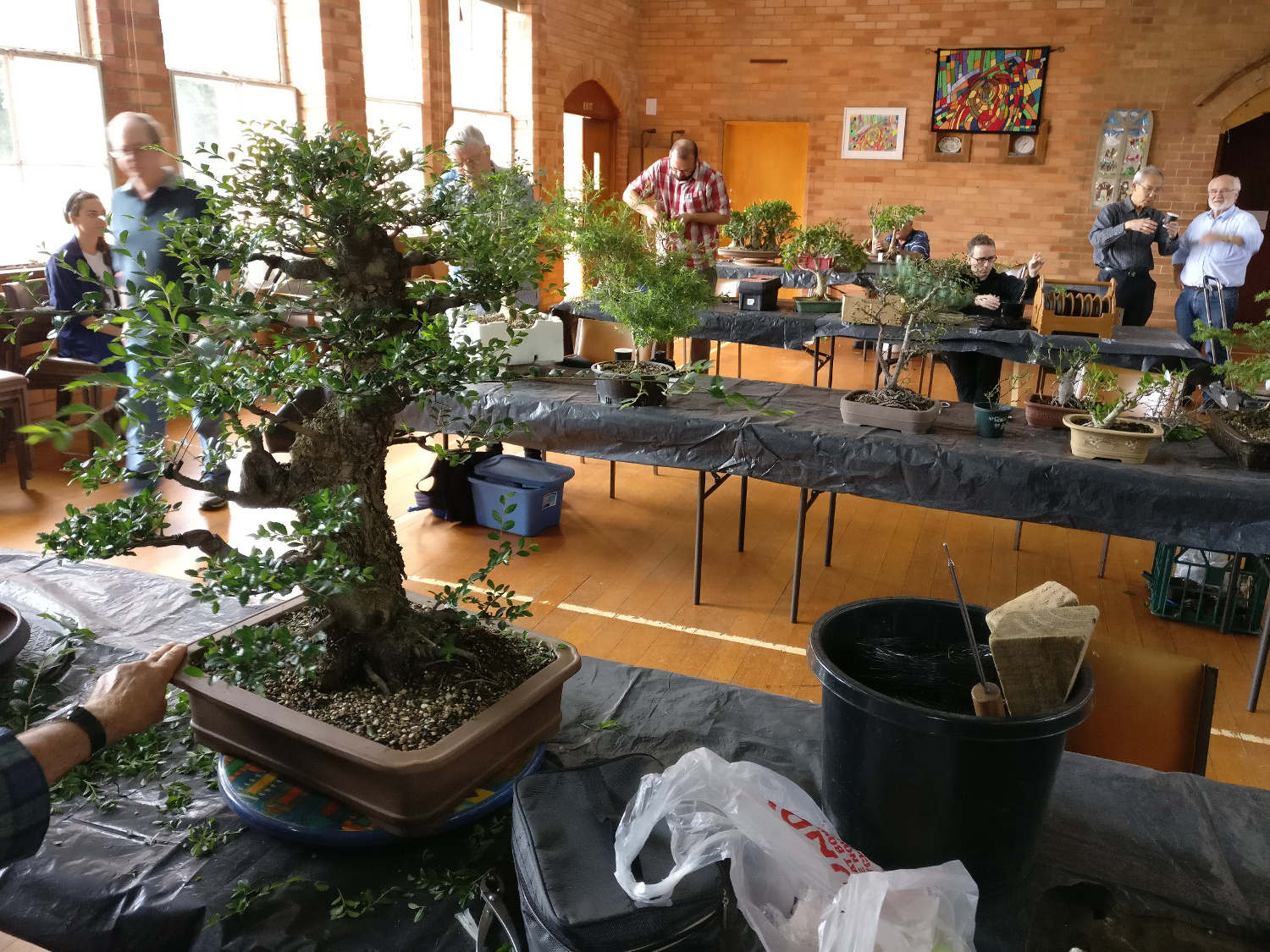Bonsai Society Of Victoria Meeting Growing Wiring Chinese Elm