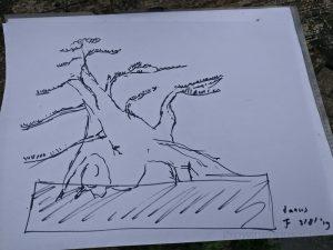 Taxus bonsai sketch