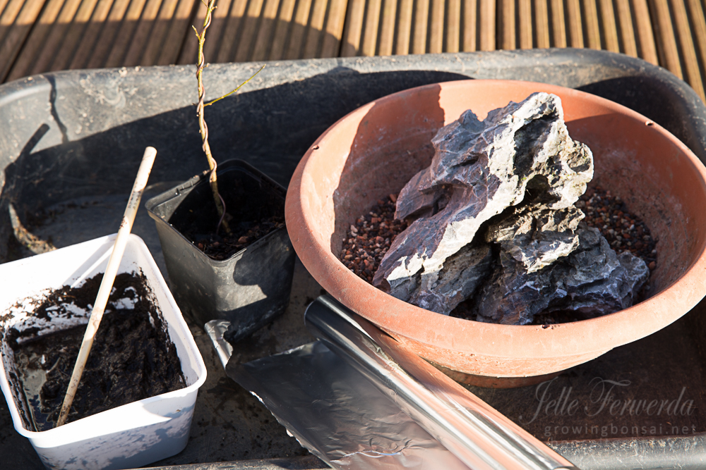 Planting root over rock bonsai